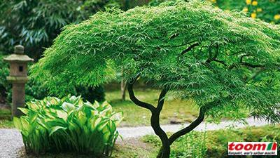 gartenpflanzen ? proxyagent.info - Gartenpflanzen