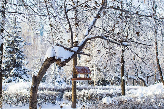 fotostrecke heimische v gel im winter wetteronline. Black Bedroom Furniture Sets. Home Design Ideas
