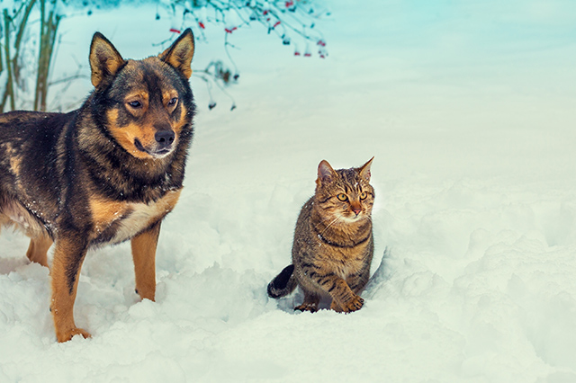 hund katze und co im winter  fotostrecke  wetteronline